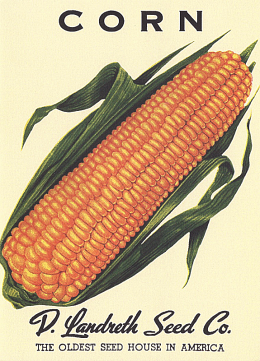 corn-note-card_1024x1024