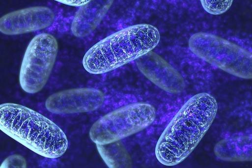 mitochondria_1050x700