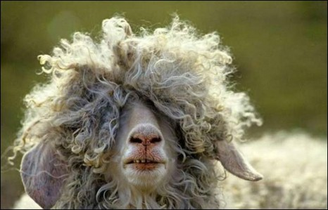 20-animals-having-a-bad-hair-day-3