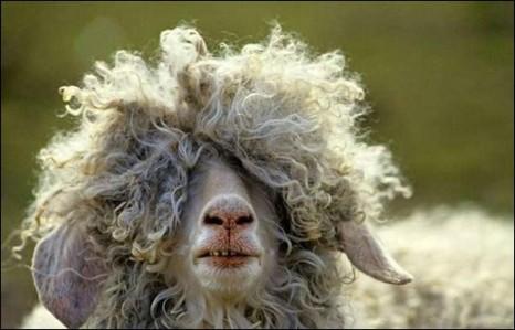 20-animals-having-a-bad-hair-day-3