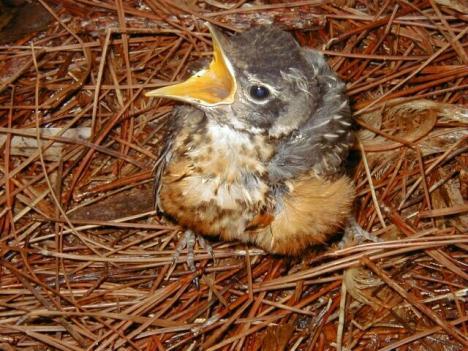 baby-bird-random-31829055-640-480