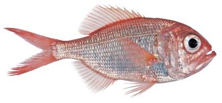 2-somanyfishon